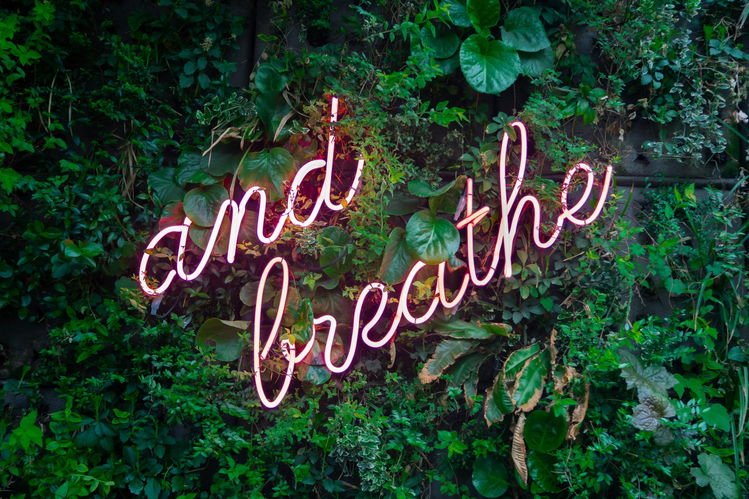 """""""And breathe"""" words written in cursive with leaves as background"""